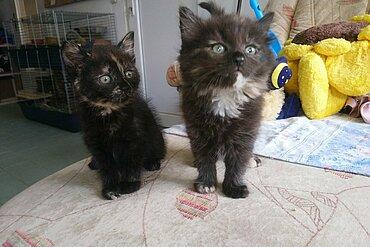 Kitten im Tierheim Meißen