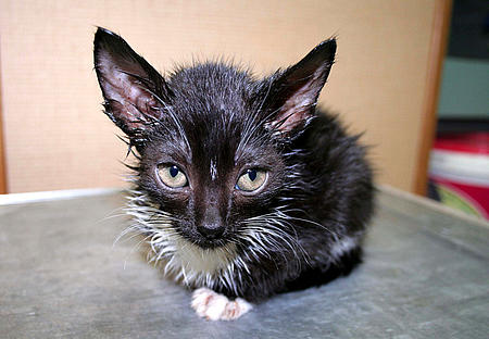 Krankes Katzenbaby