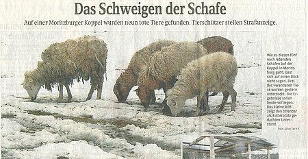 """Dresdner Land   31. Januar 2013   """"Das Schweigen der Schafe"""""""