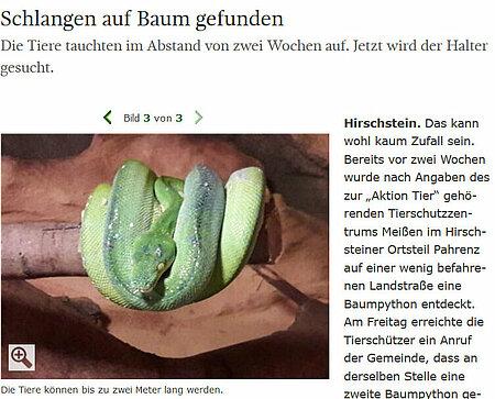 """Sächsische Zeitung   28. August 2017   """"Schlangen auf Baum gefunden"""""""