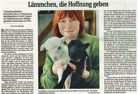 """Sächsische Zeitung   31. Mai 2013   """"Lämmchen, die Hoffnung geben"""""""