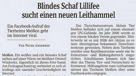 """11. Juli 2020   Sächsische Zeitung Meissen   """"Blindes Schaf Lillifee sucht einen neuen Leithammel"""""""