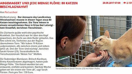 """Tag24.de   20. August 2017   """"Abgemagert und jede Menge Flöhe: 80 Katzen beschlagnahmt"""""""