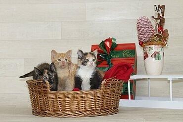 Kitten beim Fototermin