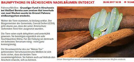 """Tag24   28. August 2017   """"Baumpythons in sächsischen Nadelbäumen entdeckt"""""""