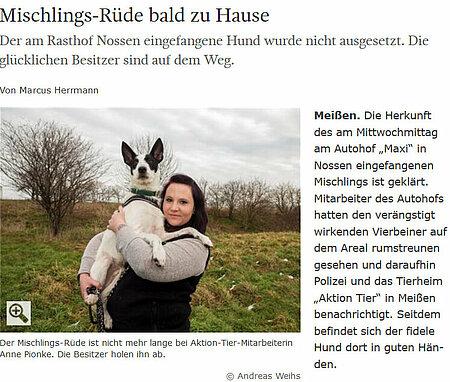 """Sächsische Zeitung   05. März 2016   """"Mischlings-Rüde bald zu Hause"""""""