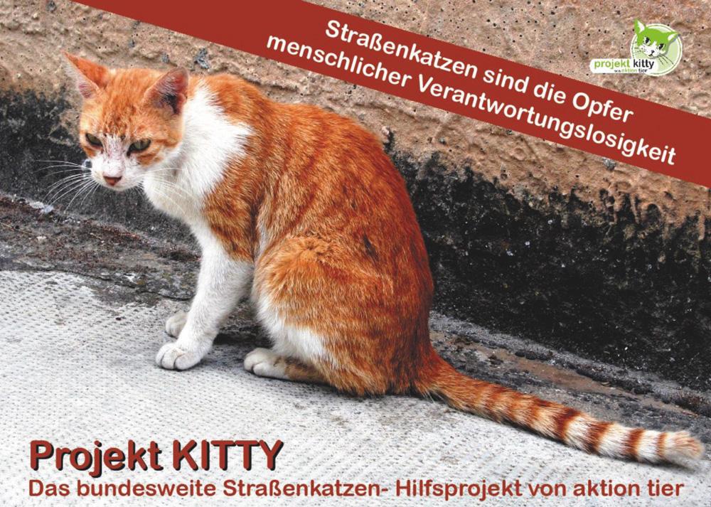 Projekt Kitty Aktion Tier Tierheim Und Tierschutzzentrum Meißen